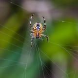 La araña en la red Imágenes de archivo libres de regalías