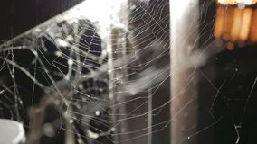 La araña en una telaraña durante noche metrajes