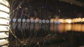 La araña en una telaraña durante noche almacen de metraje de vídeo