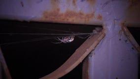 La araña está ocultando almacen de metraje de vídeo