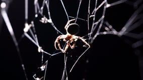La araña hace girar un web en macro almacen de video