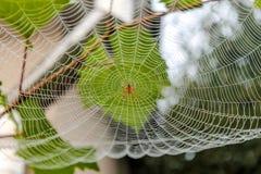 La araña se sienta en su web Foto de archivo