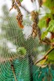 La araña se sienta en su web Imagen de archivo libre de regalías