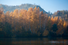 La arboleda colorida del abedul del cielo azul del paisaje del otoño del prado llano rive Imágenes de archivo libres de regalías