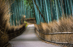 La arboleda de bambú de Kyoto Imagenes de archivo