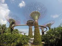 La arboleda de Supertree en los jardines por la bahía imagen de archivo libre de regalías