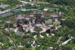 La arboleda de Supertrees en los jardines por la bahía imagen de archivo libre de regalías