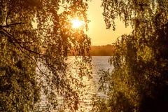 La arboleda del río del abedul sale de puesta del sol Imágenes de archivo libres de regalías