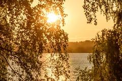 La arboleda del río del abedul sale de puesta del sol Fotos de archivo libres de regalías