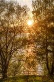 La arboleda del río del abedul sale de puesta del sol Foto de archivo