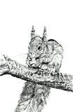 La ardilla libre illustration
