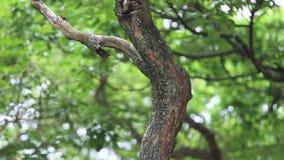 La ardilla de un Pallas mirar el agujero de la jerarquía de un perro de aguas de Taiwán del pájaro metrajes
