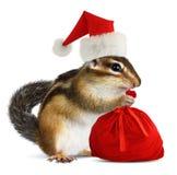 La ardilla listada en el sombrero rojo de Santa Claus con Santas empaqueta imagen de archivo