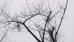 La ardilla que salta en árbol sin las hojas en otoño Visión inferior almacen de metraje de vídeo