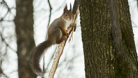 La ardilla se sienta en un árbol fotografía de archivo libre de regalías