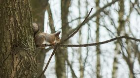 La ardilla se sienta en un árbol Imágenes de archivo libres de regalías