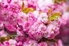 La armonía de la naturaleza creó una composición con Sakura Imágenes de archivo libres de regalías