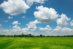 La atmósfera acogedora en los campos del arroz Entre las nubes en un cielo hermoso imagenes de archivo