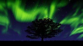 La aurora boreal se pone verde y árbol metrajes