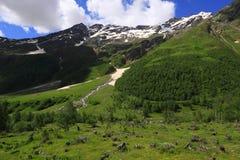 La avalancha deforest Fotos de archivo