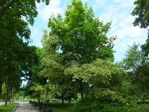 La avenida de parque cerca del convento de Novodevichy Foto de archivo
