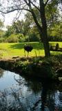 La avestruz para arriba se cierra para la foto Imagen de archivo libre de regalías