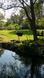 La avestruz para arriba se cierra para la foto Fotografía de archivo libre de regalías