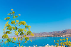 La Azohia beach Murcia in Mediterranean Spain Royalty Free Stock Image