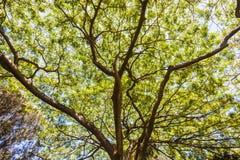 La bâche d'arbre s'embranche des feuilles Photographie stock