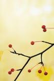 la bacca d'autunno lascia il colore giallo Fotografie Stock