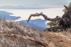 La bahía de niebla Fotos de archivo