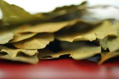 La bahía sale de cocinar las hierbas y las especias primer macro, foco selectivo fotografía de archivo libre de regalías
