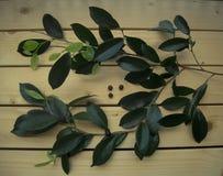 La baia si ramifica, foglie verdi fresche, condimento, sui precedenti di legno Immagine Stock