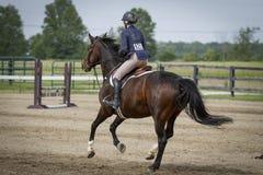 La baie d'équitation de femme galope loin Photo stock