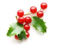 La baie de houx part de la décoration de Noël Photo stock