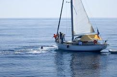 La baleine souffle ! Photos libres de droits