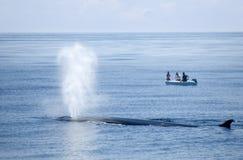 La baleine souffle ! Photo libre de droits