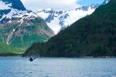 La balena che salta il paesaggio d'Alasca Fotografia Stock