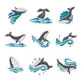La balena fra il mare ondeggia e spruzza l'insieme dell'icona di vettore royalty illustrazione gratis