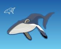 La ballena azul Fotos de archivo