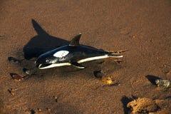 La ballena de goma miente en la orilla, concepto Foto de archivo