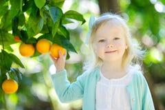 La bambina adorabile che seleziona le arance mature fresche in arancio soleggiato fa il giardinaggio Fotografia Stock