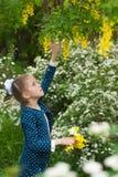 La bambina bella strappa i fiori dagli alberi in un parco di fioritura Immagini Stock Libere da Diritti