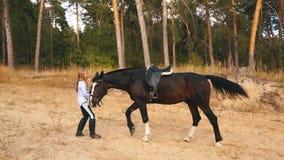 La bambina cammina nella foresta di autunno insieme al cavallo archivi video
