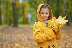 La bambina in cappotto giallo raccoglie le foglie di acero gialle Fotografia Stock