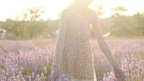 La bambina che cammina nella lavanda commovente di fioritura del campo viola fiorisce archivi video