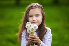La bambina che odora denti di leone bianchi in primavera parcheggia Immagini Stock