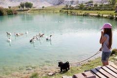 La bambina con il suo cane sta guardando alle oche di galleggiamento Fotografia Stock