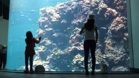 la bambina 4k e la donna sono osservare Coral Reef in asiatico Oceanarium archivi video