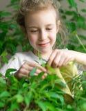 La bambina pulisce la polvere dalle foglie fotografia stock